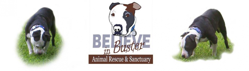 Believe In Buster